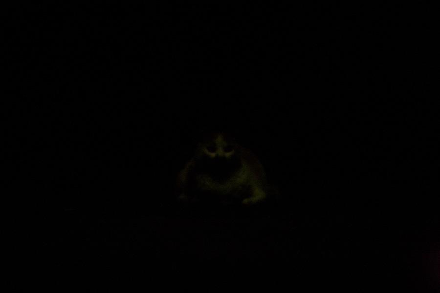 「暗闇 黒猫」の画像検索結果