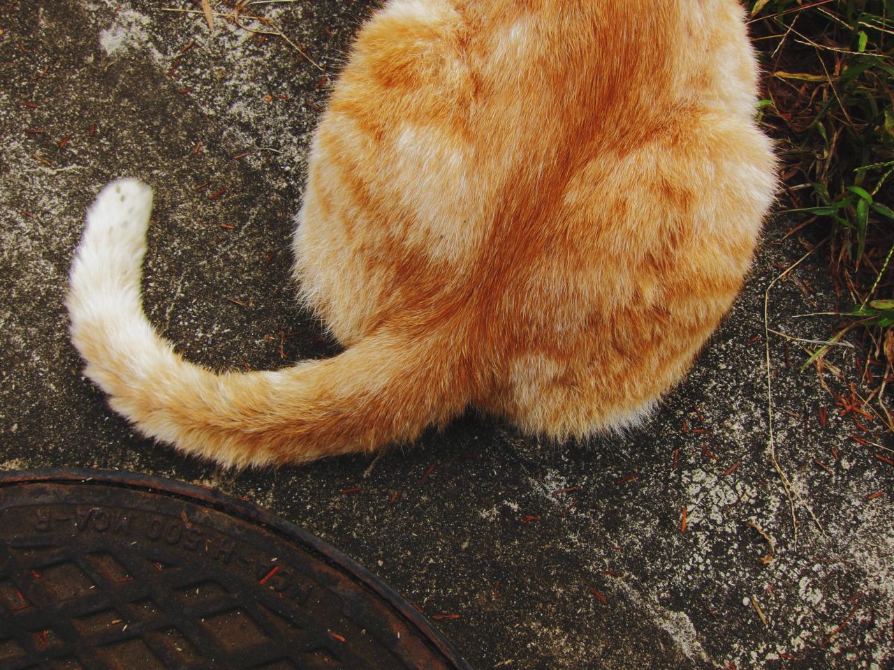 猫のしっぽの振り方で回転している場合の感情は? …