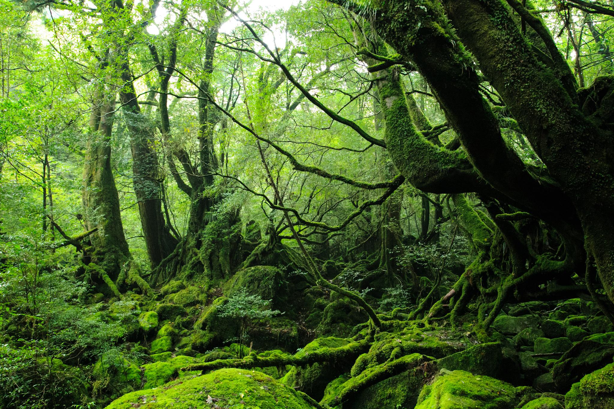 SokuUp :: 風景 自然 森林 原生...
