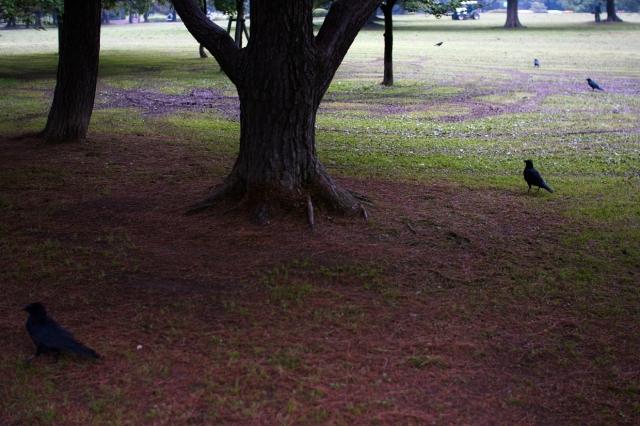 soku_00392.jpg :: 自然 風景 動物 鳥類