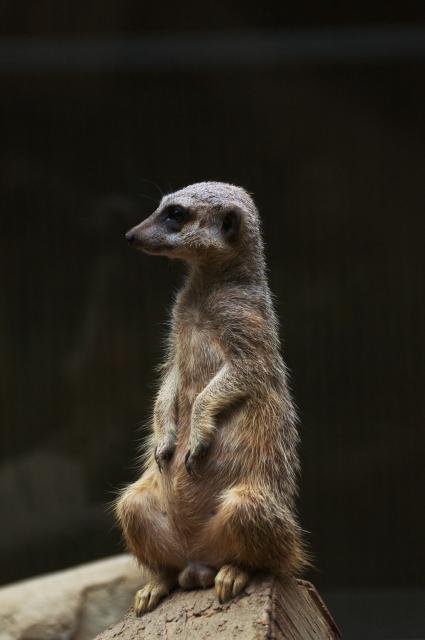 soku_09289.jpg :: 動物 哺乳類 動物園 上野動物園