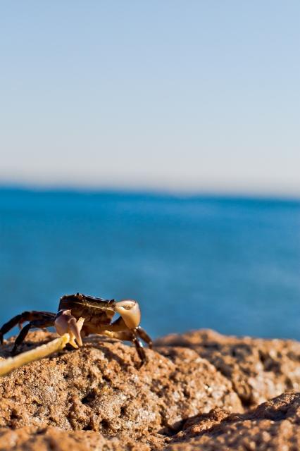 soku_10328.jpg :: 動物 海の生物 カニ