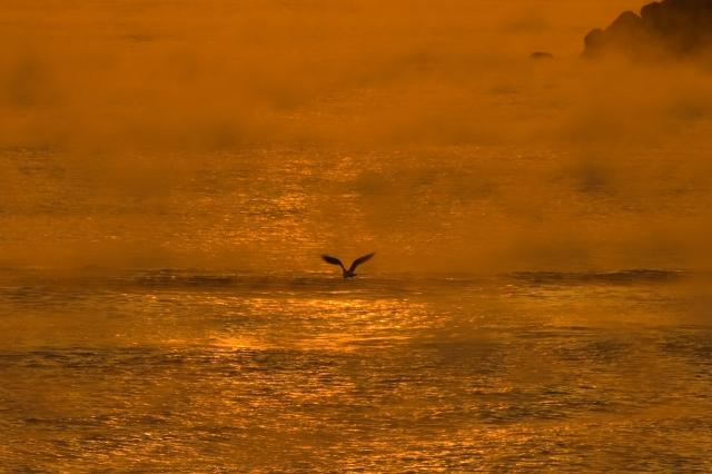 soku_10363.jpg :: 風景 海 朝霧 動物 鳥 鷗 カモメ ウミネコ