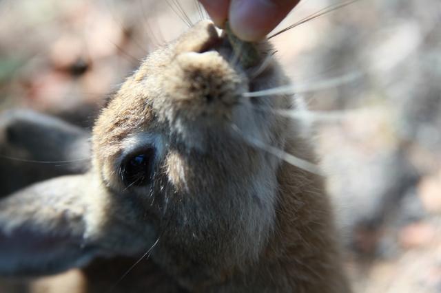 soku_20404.jpg :: 動物 哺乳類 兎 ウサギ