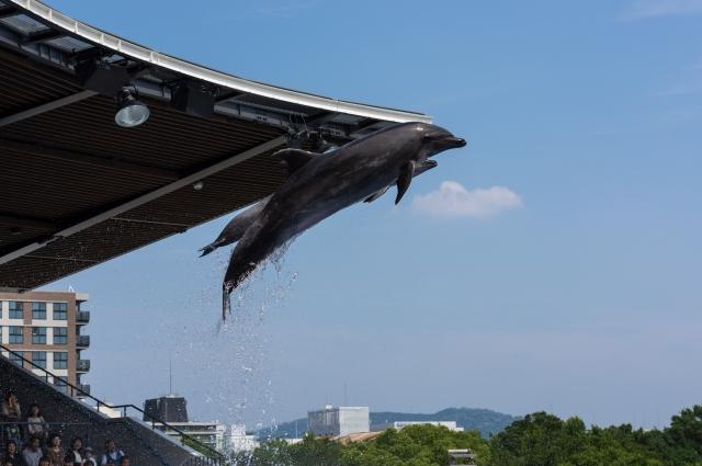 soku_32723.jpg :: 動物 海の生物 イルカ イルカショー 京都水族館