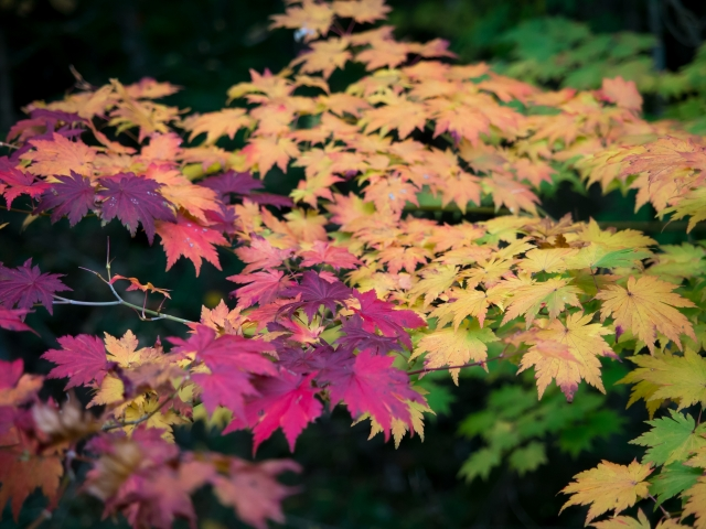 soku_33251.jpg :: 風景 自然 紅葉