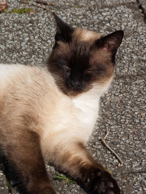 soku_34854.jpg :: 動物 哺乳類 猫 ネコ 子猫