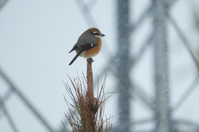 soku_35437.jpg :: 動物 鳥 野鳥 自然の鳥 未記入鳥