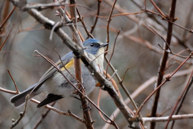 soku_35594.jpg :: 動物 鳥 野鳥 自然の鳥 未記入鳥
