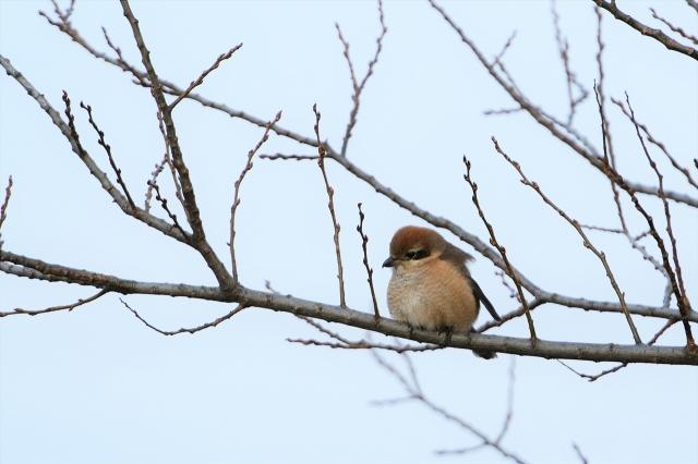soku_35624.jpg :: 動物 鳥 野鳥 自然の鳥 未記入鳥