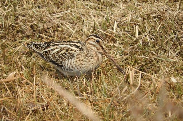 soku_35657.jpg :: 動物 鳥 野鳥 自然の鳥 未記入鳥