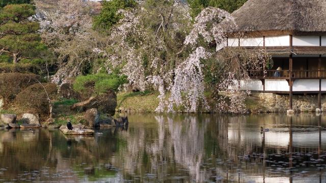 soku_35861.jpg :: 衆楽園 日本庭園 岡山 津山