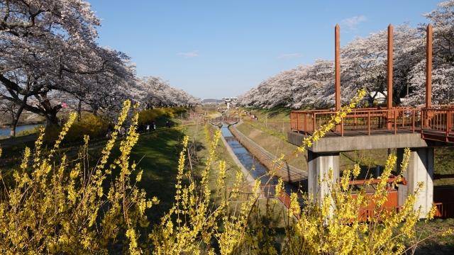 soku_36482.jpg :: 宮城県 一目千本桜