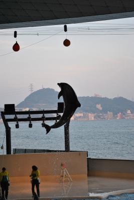 soku_00394.jpg :: 動物 哺乳類 イルカ