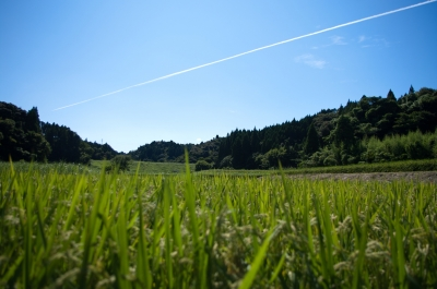 soku_01324.jpg :: 風景 畑 空 飛行機雲