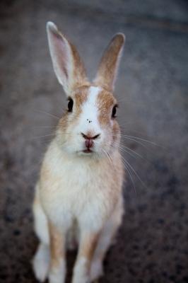soku_01886.jpg :: 動物 哺乳類 兎 ウサギ