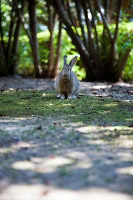 soku_01887.jpg :: 動物 哺乳類 兎 ウサギ