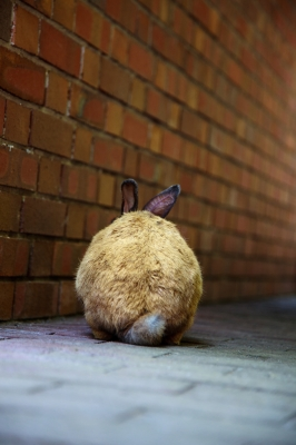 soku_01888.jpg :: 動物 哺乳類 兎 ウサギ