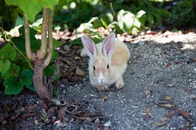 soku_01890.jpg :: 動物 哺乳類 兎 ウサギ
