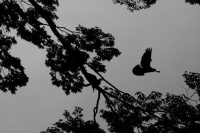 soku_01929.jpg :: 自然 風景 動物 鳥類