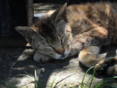 soku_02047.jpg :: ν速公認コンデジPowerShotS95 動物 哺乳類 猫 ネコ 爆睡