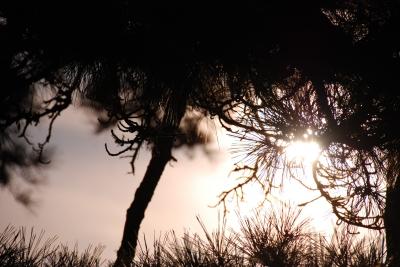 soku_02188.jpg :: 自然 風景 夕日 夕焼け 日没 樹木 松 光 D80