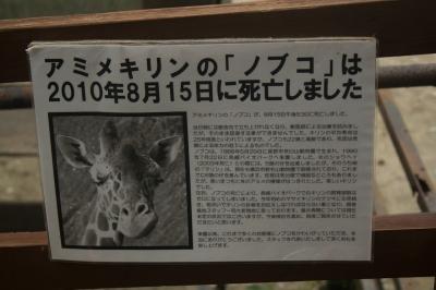 soku_02543.jpg :: 長崎バイオパーク アミメキリン ノブコ 死亡