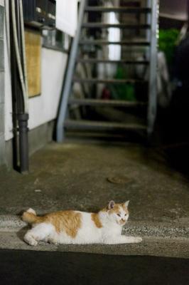 soku_03207.jpg :: 動物 哺乳類 猫 ネコ