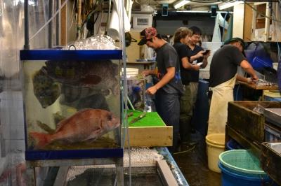 soku_03573.jpg :: 動物 魚類 魚屋 水槽