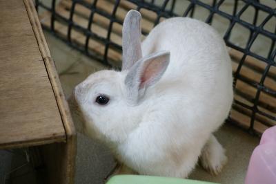 soku_04113.jpg :: 動物 哺乳類 兎 ウサギ