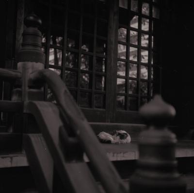 soku_04756.jpg :: 動物 哺乳類 猫 ネコ 銀塩 フィルム モノクロ 白黒
