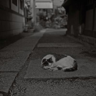 soku_04757.jpg :: 動物 哺乳類 猫 ネコ 銀塩 フィルム 白黒 モノクロ
