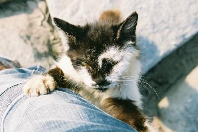soku_04925.jpg :: 動物 哺乳類 猫 ネコ
