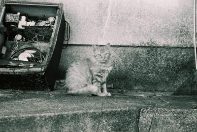 soku_05051.jpg :: 動物 哺乳類 猫 ネコ モノクロ