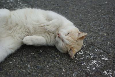 soku_05055.jpg :: 動物 哺乳類 猫 ネコ