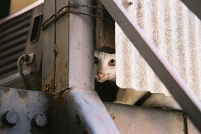 soku_05092.jpg :: 動物 哺乳類 猫 ネコ 子猫