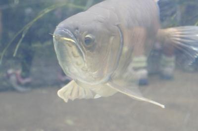 soku_05148.jpg :: 動物 魚類 熱帯魚