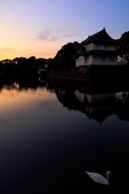 soku_05253.jpg :: 建築 建造物 宮殿 城 皇居 動物 鳥 白鳥 ハクチョウ