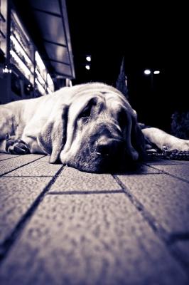 soku_05485.jpg :: 動物 哺乳類 犬 イヌ