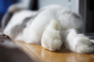 soku_05733.jpg :: 動物 哺乳類 兎 ウサギ うさぎ