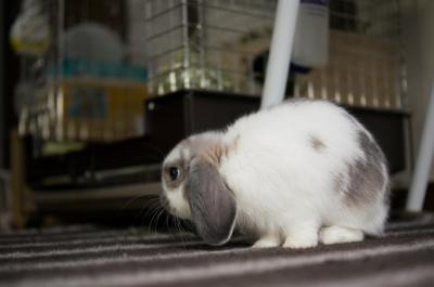 soku_05734.jpg :: 動物 哺乳類 兎 ウサギ うさぎ