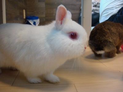 soku_05794.jpg :: 動物 哺乳類 兎 ウサギ うさぎ うさぎカフェ
