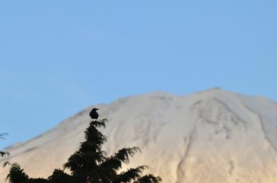 soku_05896.jpg :: 風景 自然 山 雪山 動物 鳥 カラス