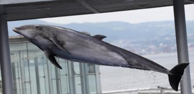 soku_06329.jpg :: 建築 建造物 水族館 動物 海の生物 イルカ