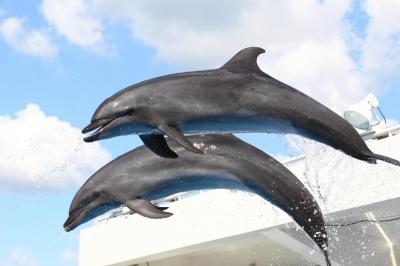 soku_06331.jpg :: 水族館 動物 海の生物 イルカ ジャンプ