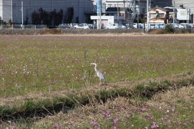 soku_06373.jpg :: 動物 鳥 鶴 ツル