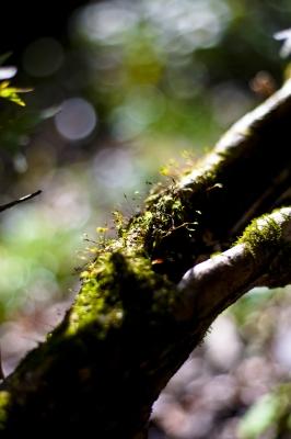 soku_06544.jpg :: 植物 樹木 その他 苔 開放