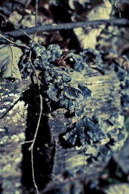 soku_06572.jpg :: 植物 その他 きのこ 菌