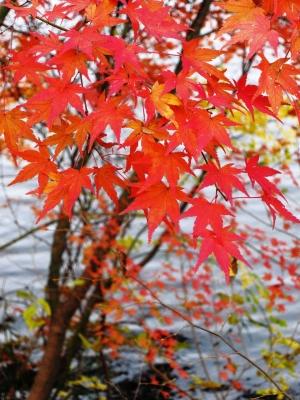 soku_06577.jpg :: PowerShotS95 風景 自然 紅葉 赤い紅葉 水分 湖 円良田湖