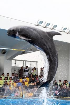 soku_06844.jpg :: 動物 海の生物 イルカ